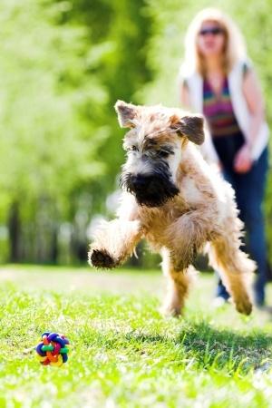 Oral Melanoma | BluePearl Specialty + Emergency Pet Hospital
